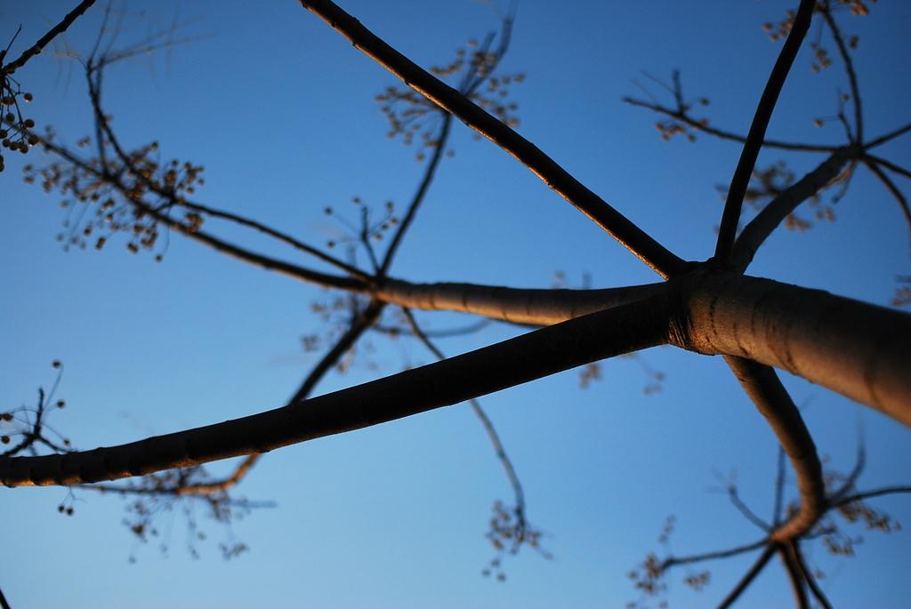 実をつけた木