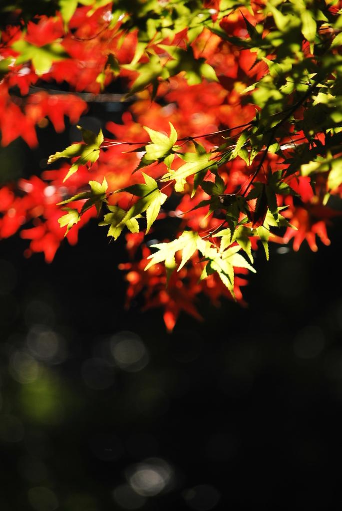 紅葉のコントラスト