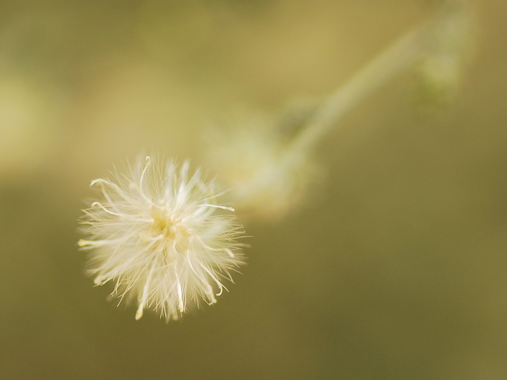 咲くを待つ