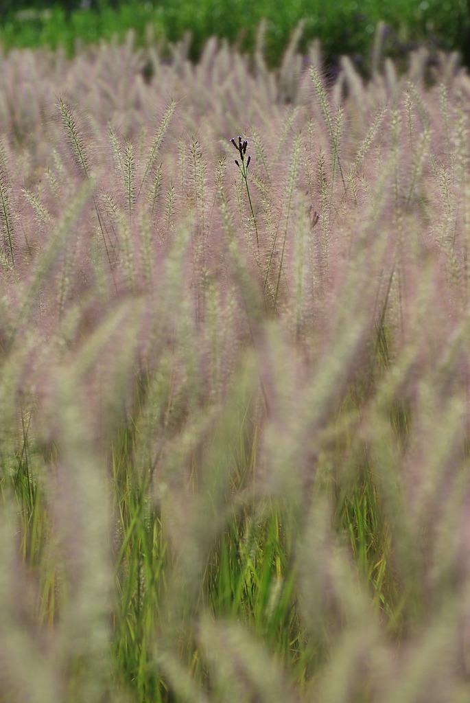 夏草とかくれんぼ