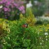お花畑とアゲハ蝶