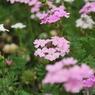 NIKON NIKON D60で撮影した植物(お花畑)の写真(画像)
