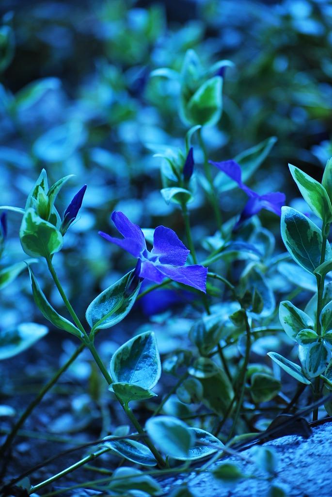 日陰に咲く花