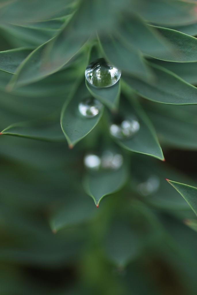 梅雨のお土産