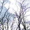 冬空を見上げて