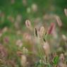 NIKON NIKON D60で撮影した植物(秋風)の写真(画像)