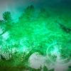 a drop in emerald