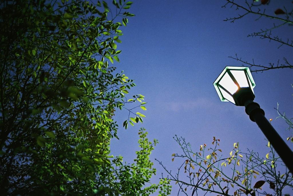 ライトアップグリーン