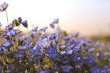 heaven of purple