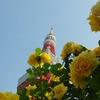 バラと東京タワー