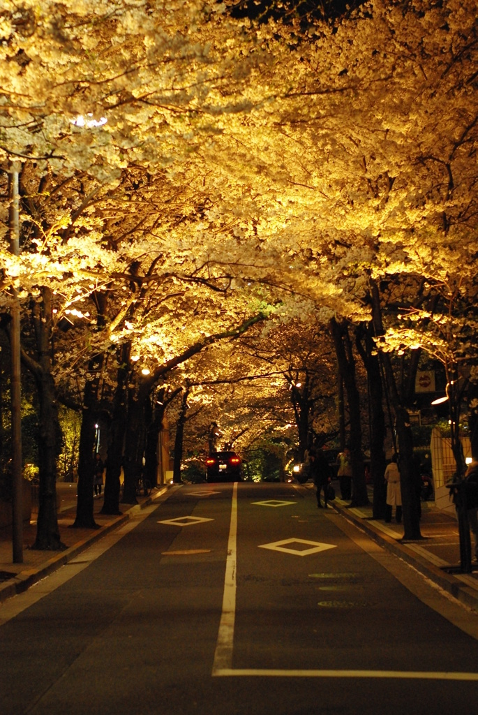 桜トンネル