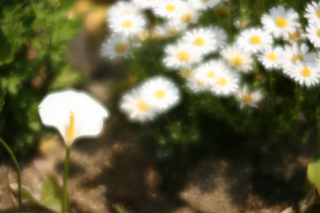 花壇の花にフレア