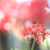 天上の花~光に満ちて~