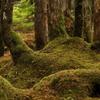 木霊(こだま)の森
