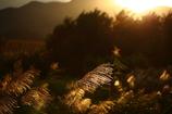 秋風の輝き
