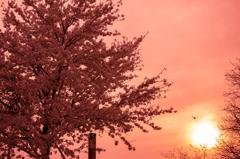 桜満ちる時、終わりの始まり