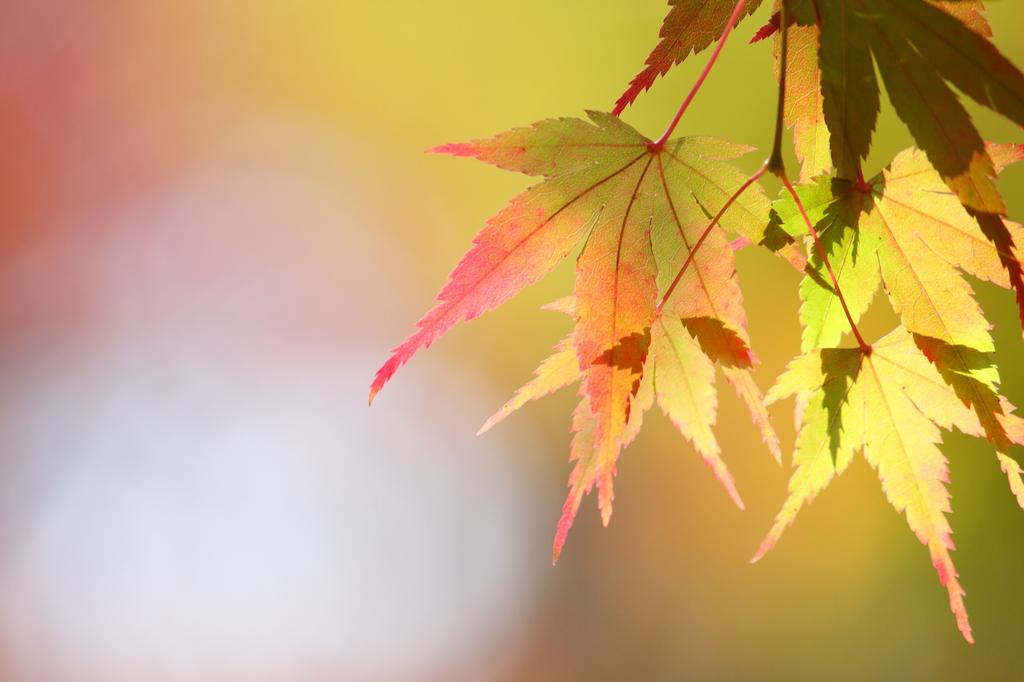 秋のパステル