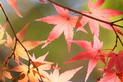 淡い秋色の輝き