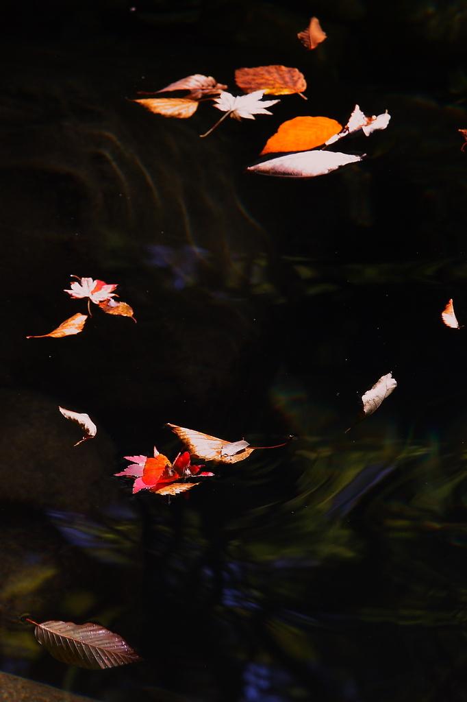水面の落ち葉