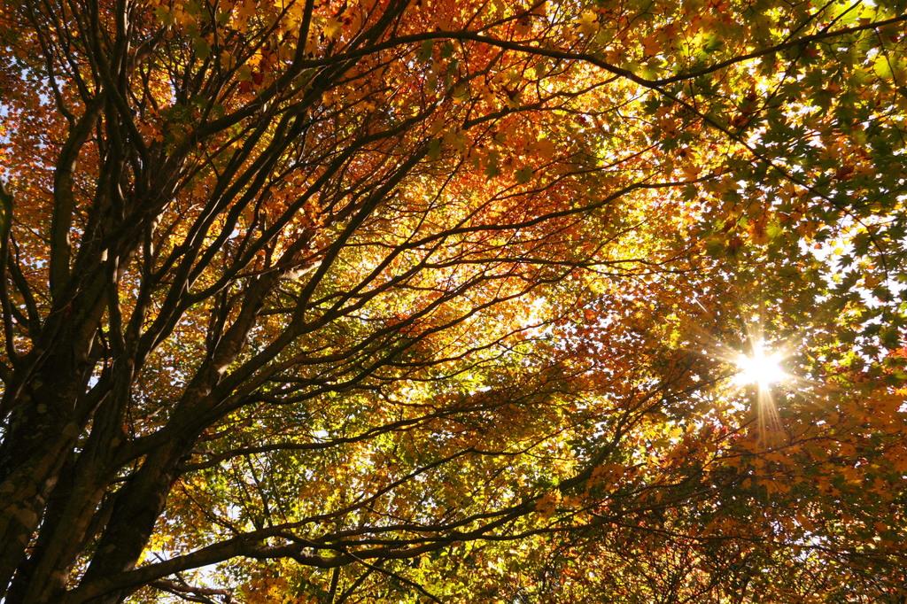 秋のこもれび