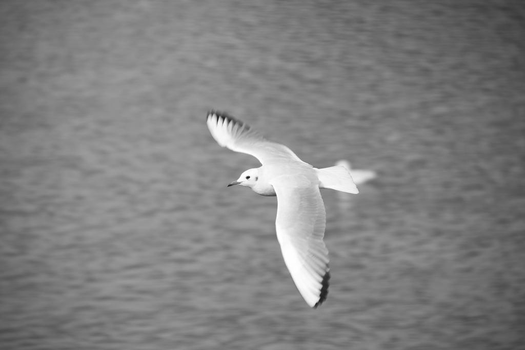優雅な飛翔