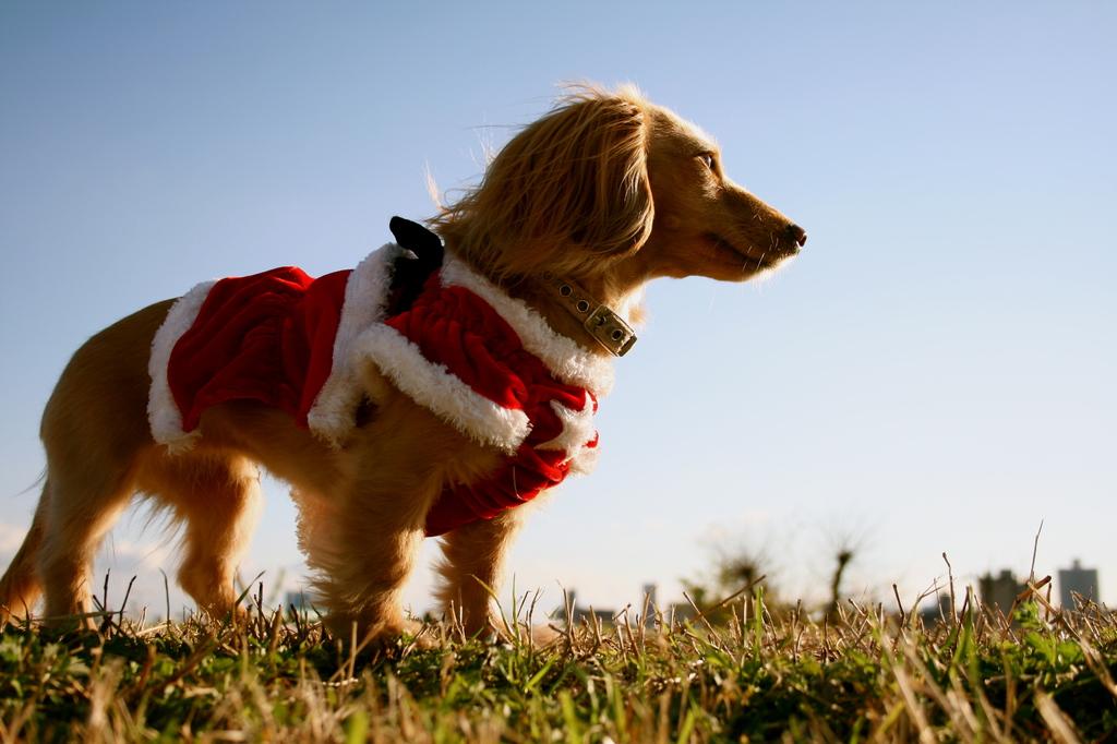 サンタ犬いざ出陣