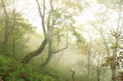 森へいきましょう