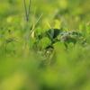 緑の中からコンニチハ