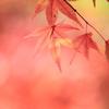 秋にとけゆく