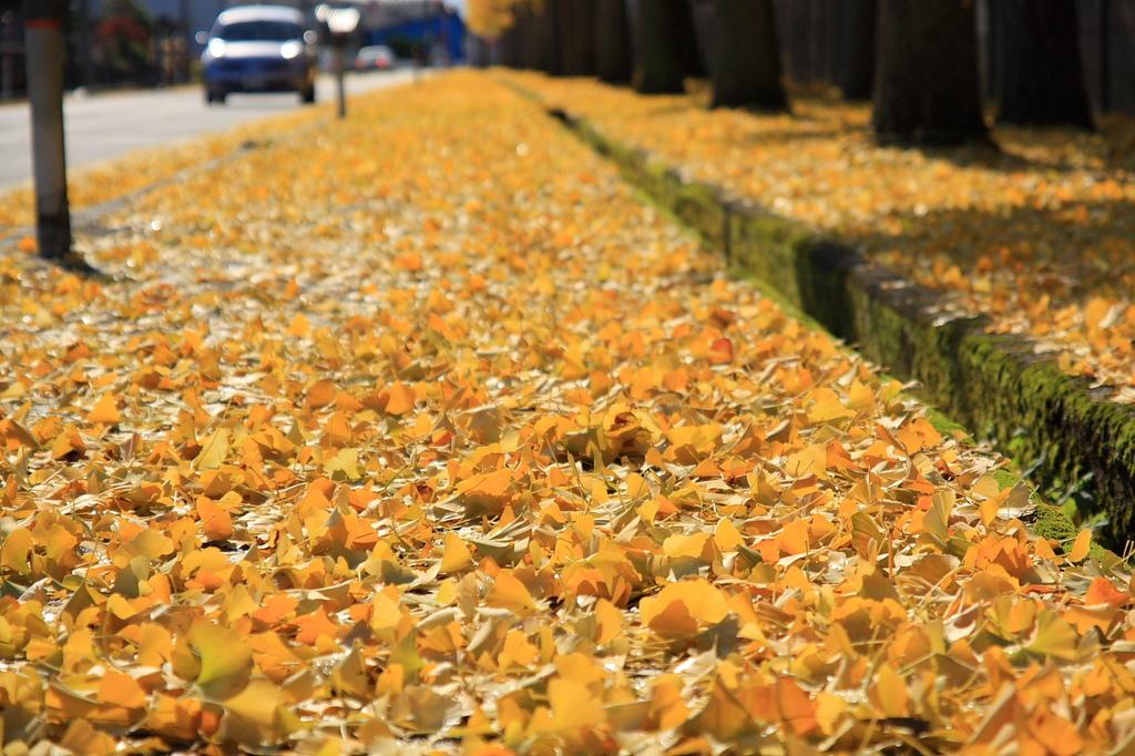 秋が行くⅡ
