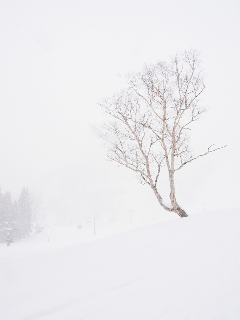 Tree in White