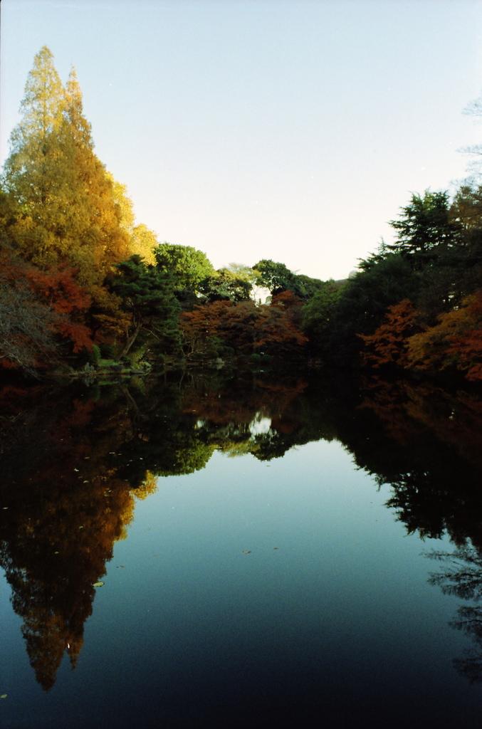 池の水が鏡みたいに