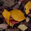 あしもとの秋