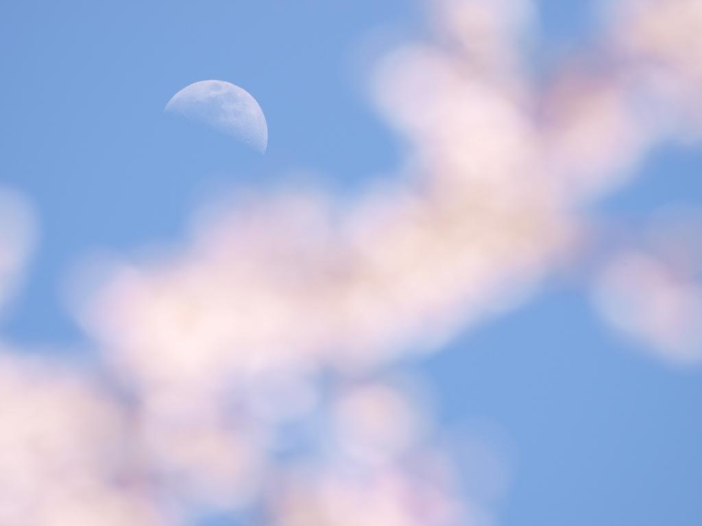 月より遠い近くの花