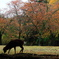 Nara kouen