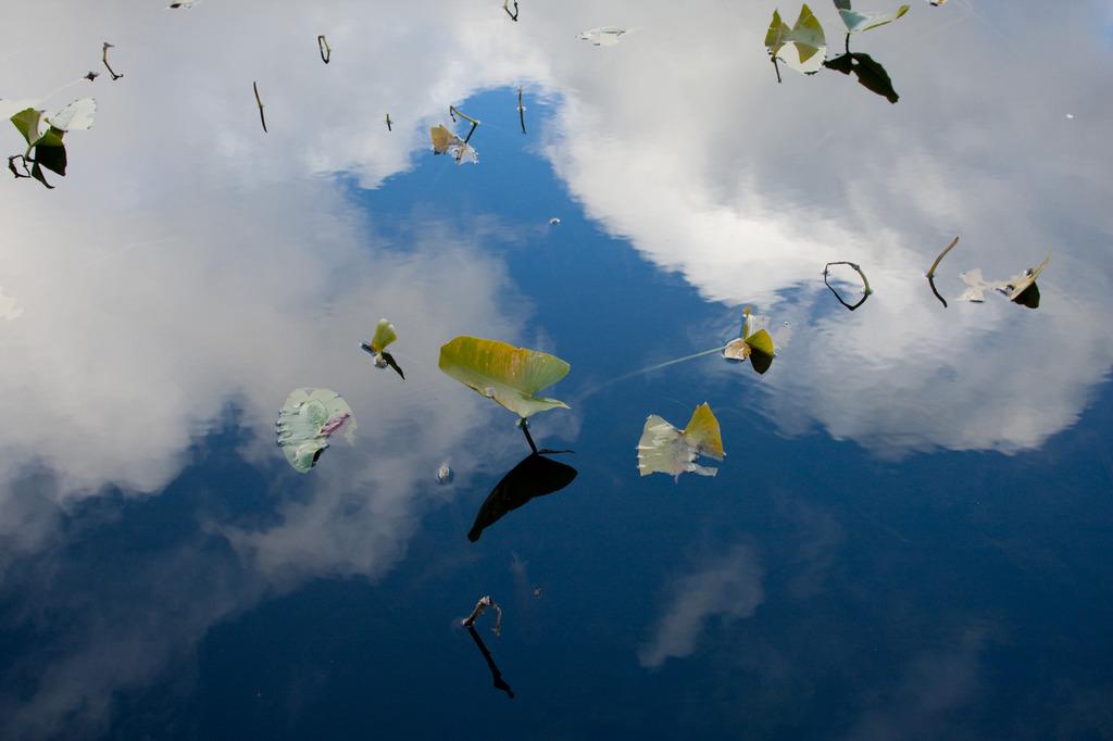 Sky Leaf