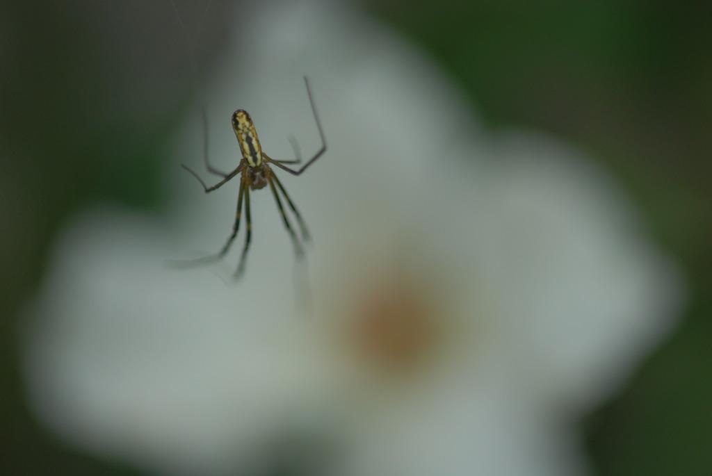 溶けていく蜘蛛