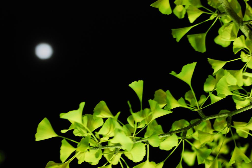 見上げたら月が