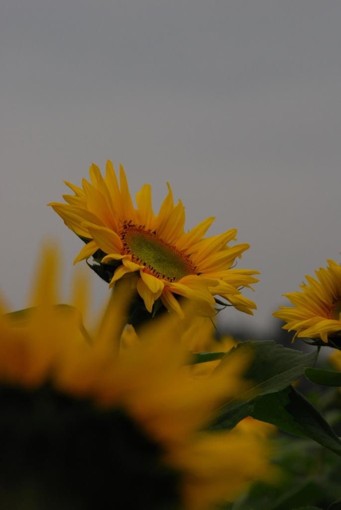 太陽を待つ