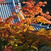北鎌倉 円覚寺の紅葉