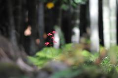 竹林の中で静かに咲く