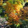 海蔵寺の紅葉