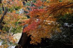 古都鎌倉の紅葉