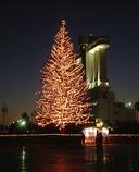 名古屋港クリスマスツリー