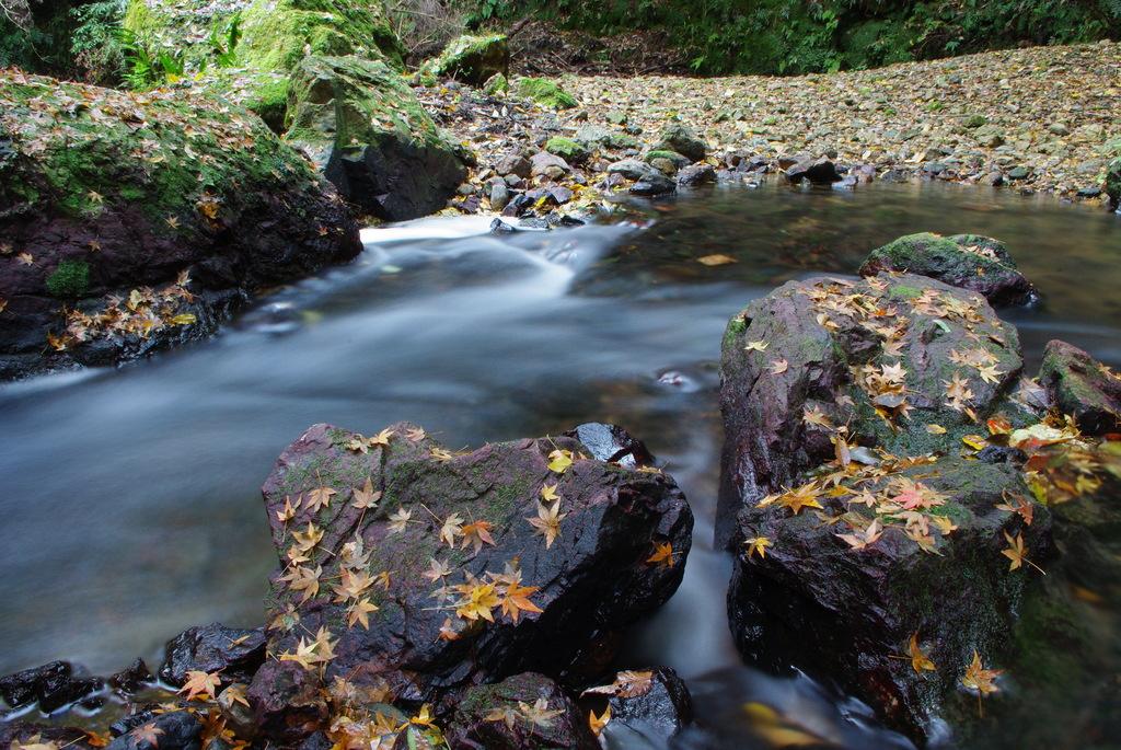 紅葉散る渓谷