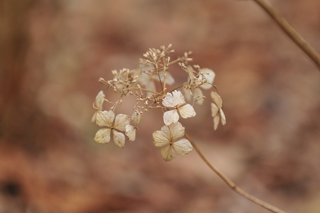 Natural Dry Flower