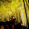 黄金色の林