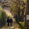 秋の散歩道①