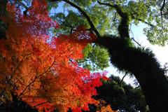 広島城・紅葉