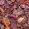 落葉のタペストリー